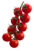 Tomate fresco — Fotografia Stock