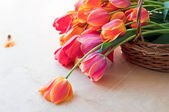 Bouquet of red tulips — Stockfoto
