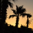 Royalty-Free Stock Photo: Palm at the sunset