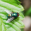 Colorful fly — Stock Photo