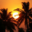 Beautiful sunset among the palms — Stock Photo