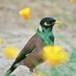 Stock Photo: Bird in flowers