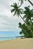 Palm trees on a tropical beach — Stock Photo