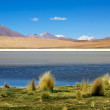 Laguna colorada, Bolivia — Stock Photo