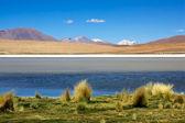 Laguna colorada, Bolivia — Stock Photo