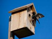 Birdhouse with blackbird — Stock Photo