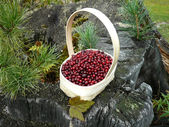 Berry cowberry in basket — Stock Photo