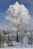 Belarus winter — Stock Photo