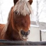 Horse — Stock Photo #5743702