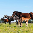 Mare & Foal - Stock Photo