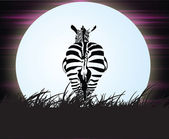 Zebra in the night — Stock Photo