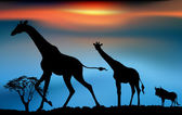 African wildlife sunrise — Stock Photo