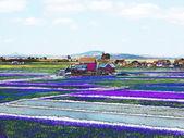 Campos y paisaje rural artístico — Foto de Stock