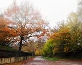 Empty street at fall — Stock Photo