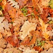fall background — Stock Photo