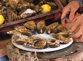 Opening oysters — Stock Photo
