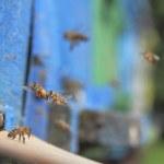 Arı ve arı kovanı — Stok fotoğraf