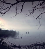 Famille des canard de marche matin — Photo