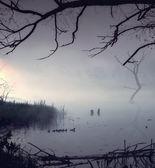 早上步行鸭家庭 — 图库照片