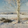 Rural winter multifaceted panorama - Stock Photo