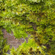 A stone covered with moss — Stock Photo
