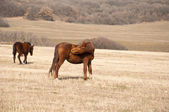 Horse grazing in a meadow — Stock Photo