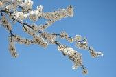 春 — ストック写真