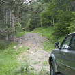 Suv driving through the woods — Stock Photo #5826534