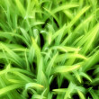 Stock Photo: Close up of grass