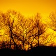 Stock Photo: Winter trees, sunset