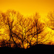 Winter trees, sunset — Stockfoto