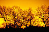 Winter trees, sunset — Stock Photo