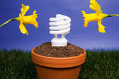 Energy saving light bulb planted — Stock fotografie