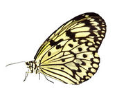 Butterfly - Photo Object — Stock Photo