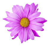 Purple Flower - Photo Object — Stock Photo