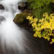 Autumn Waterfall, nature stock photography — Stock Photo