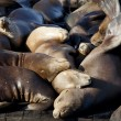 Sea Lions Sleeping on Dock — Stock Photo
