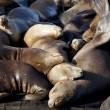 Sea Lions Sleeping on Dock — Stock Photo