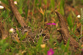Diamondback Rattlesnake by Deer Antler — Stock Photo