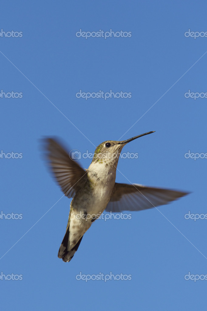 A hummingbird flying against a blue sky — Stock Photo #6581684
