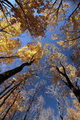 Yellow Fall Leaves and Trees Against Blue Sky — Stock Photo