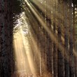 Sun rays shining through trees on a foggy morning — Stock Photo #5764215