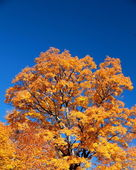 Yellow fall leaves against a blue sky — Stock Photo