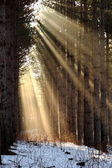Sun rays shining through trees on a foggy morning — Stock Photo