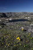 High mountain lake with flowers in foreground — Stock Photo