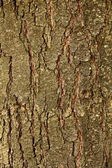 Red pine bark pattern — Stock Photo