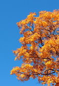 Yellow Fall Leaves and Tree Against Blue Sky — Stock Photo