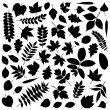 Collection of Leaf Silhouettes - Stok Vektr