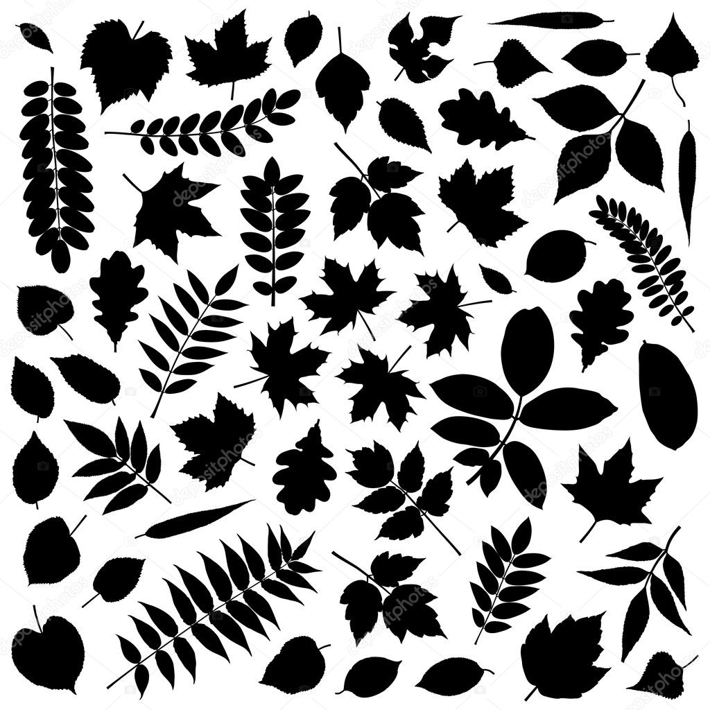 Big collection of different vector leaf silhouettes  Stock Vector #6069905
