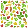 Stock Vector: Collection of Green and Autumn Leaves